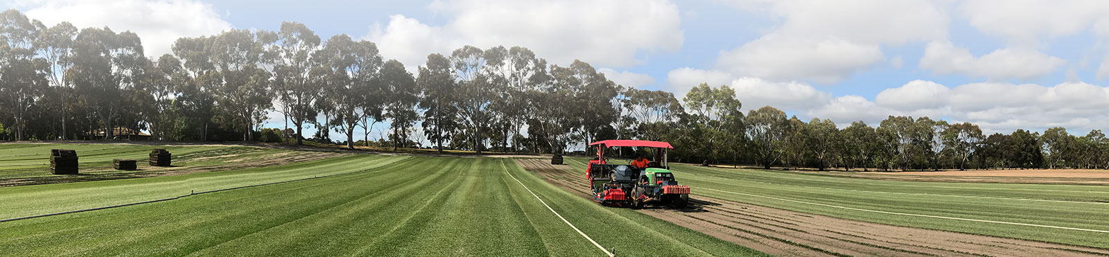 Top 3 Reasons to Buy Sir Walter DNA Certified Turf in Australia