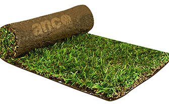 How to Lay Sir Walter Buffalo Turf?
