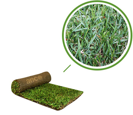 TIFTUF Turf – Available in 2018