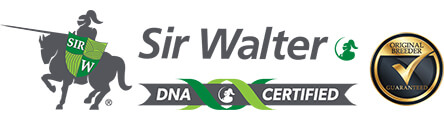 Sir Walter DNA Certified Buffalo Turf