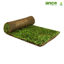 Buy Sir Walter DNA Certified Turf Online