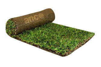 Sir Walter DNA Certified Turf – Why When Where