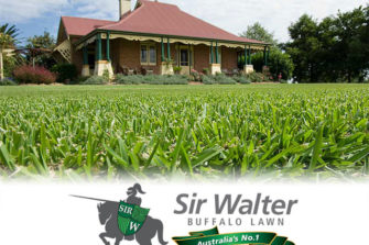 Tips for Buying Sir Walter Buffalo Grass Online