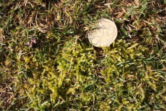 A rolling stone gathers no moss