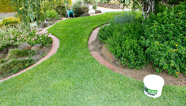Autumn and Winter Quick fix tips for lawns
