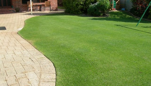 Tall Fescue Lawn is the perfect lawn in Winter
