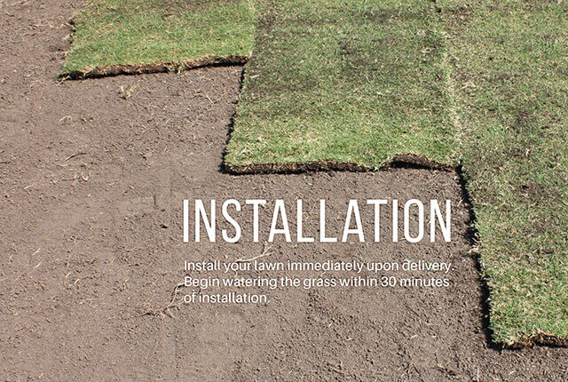 Step 4: Turf Installation