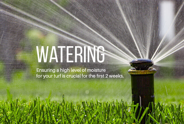 Step 5: Turf Watering