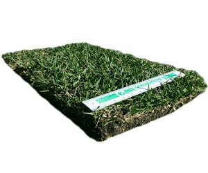 Turf Tablet – Sir Walter DNA Certified Buffalo
