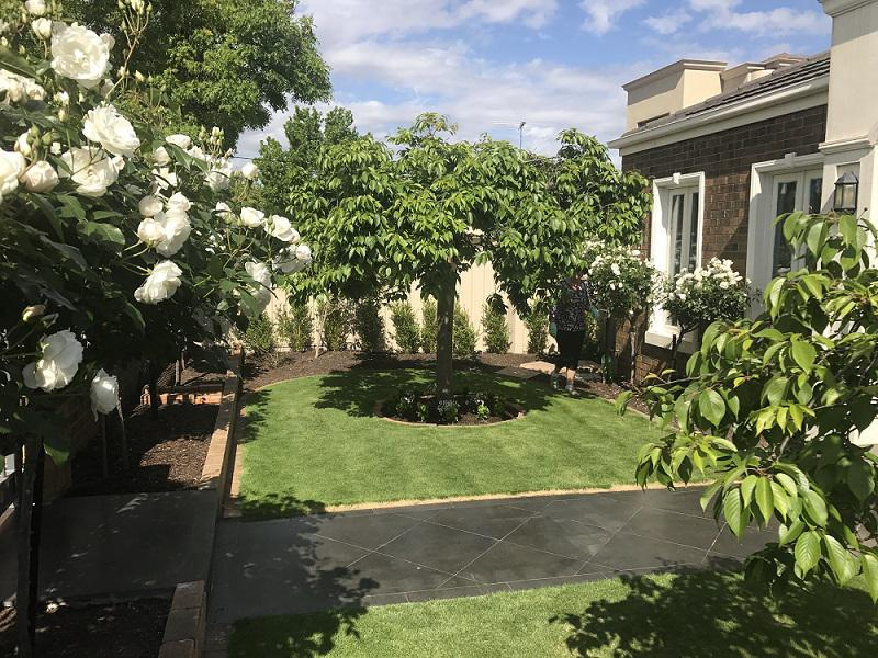 What is the Best Fertilizer for Lawns?