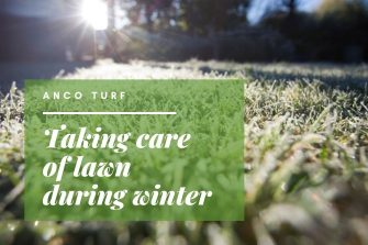 Taking Care of Lawn During Winter