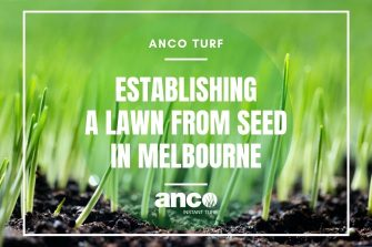 Establishing A Lawn From Seed in Melbourne