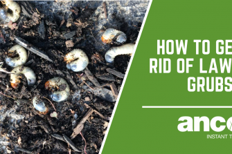 How Do You Get Rid Of Lawn Grubs