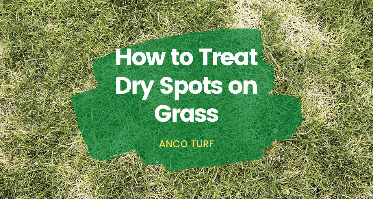 How to Treat Dry Spots on Grass