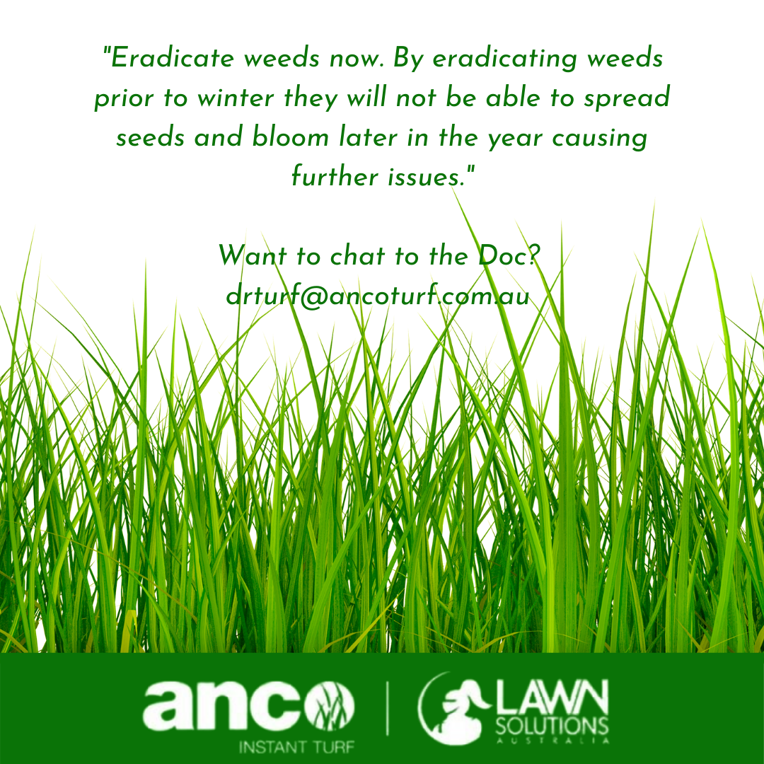 Lawns were meant to be easy