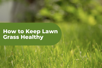 How to Keep Lawn Grass Healthy – 6 Top Tips