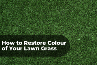 How to Restore Colour of Your Lawn Grass